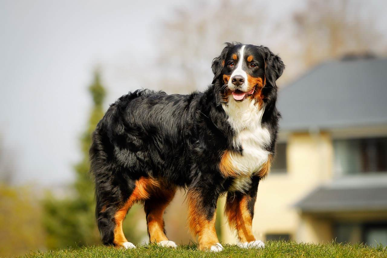 The Most Royal Dog Breeds