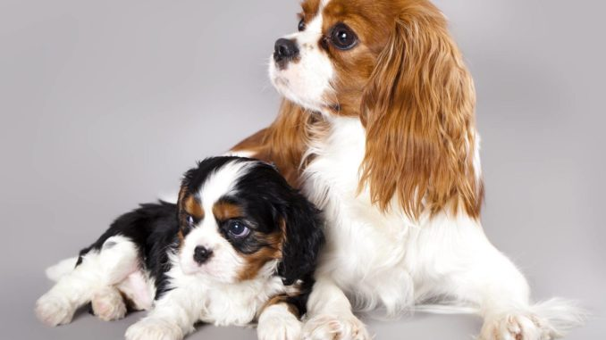 Hund single haushalt