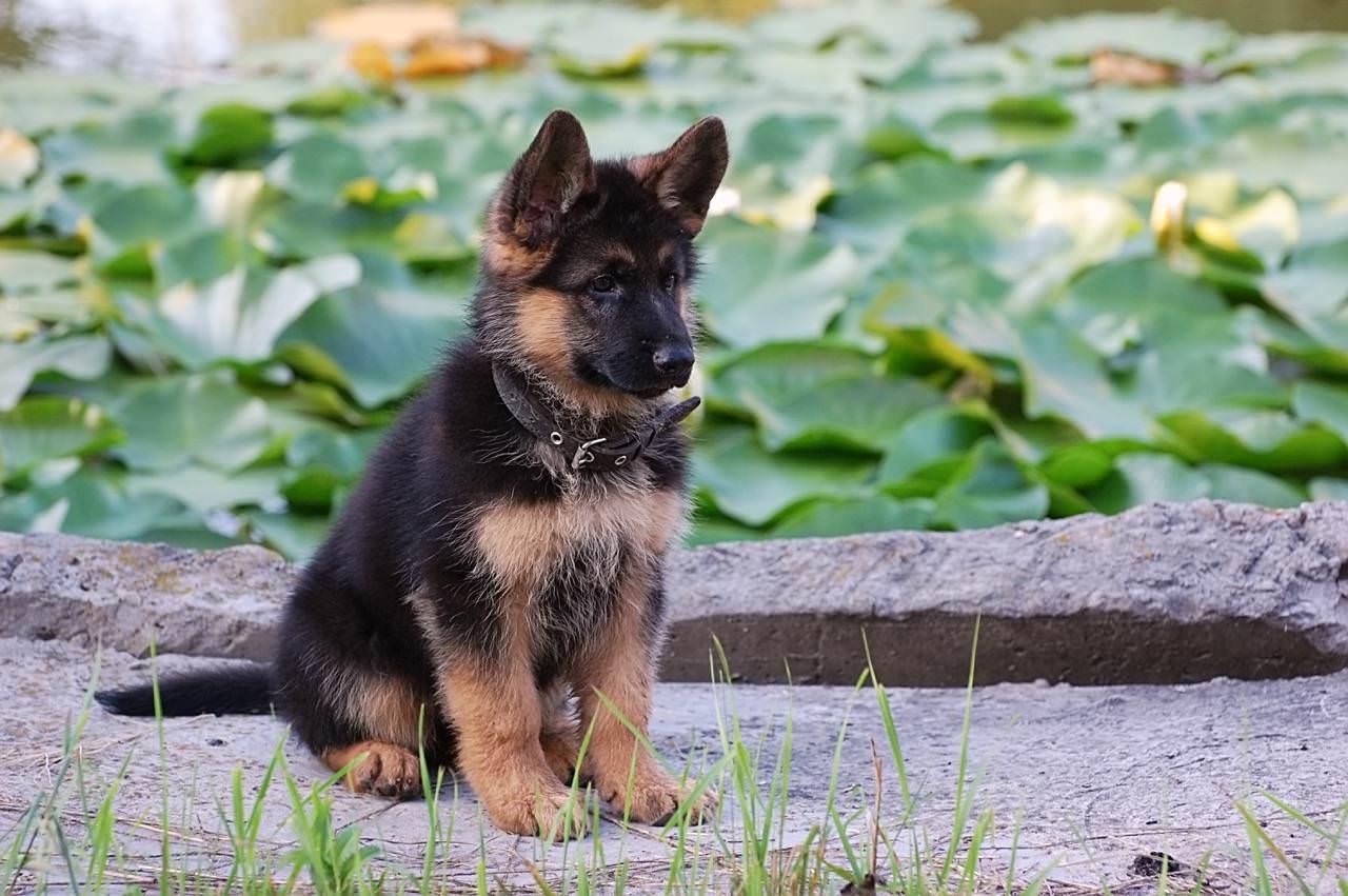 A Dog Name Soxie
