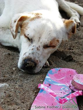 Hund am Strand im Schatten