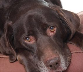 Würmer bei Hunden – die Symptome erkennen