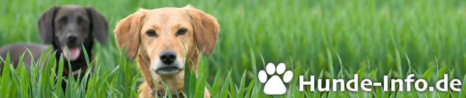 Hunde-Info.de header image
