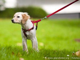 Hunde Tipps und Tricks