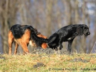 Hundewürmer vermeiden
