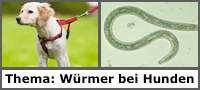 Würmer bei Hunden